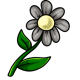 Grey Daisy