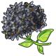 Giant Black Hydrangea