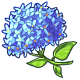 Giant Blue Hydrangea