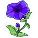 Giant Blue Petunia
