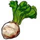 Giant Celeriac