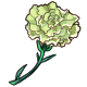 Giant Green Carnation