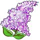 Giant Lilac