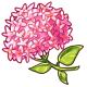 Giant Pink Hydrangea