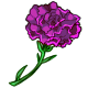 Giant Purple Carnation