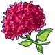 Giant Red Hydrangea