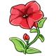 Giant Red Petunia