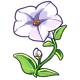 Giant White Petunia