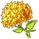 Giant Yellow Hydrangea