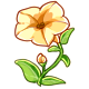 Giant Yellow Petunia