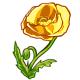 Giant Yellow Poppy