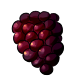 Giant Boysenberry