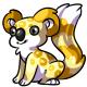 Yellow Koa