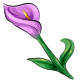 Amethyst Calla Lily