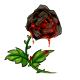 Bloody Black Rose