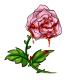 Bloody Pink Rose