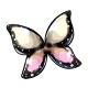 Dawn Morpho Butterfly Wings