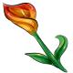 Flame Calla Lily