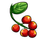 Giant Chokeberry