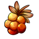Giant Cloudberry