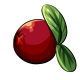 Giant Cranberry