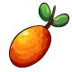 Giant Kumquat