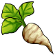 Giant Sugar Beet