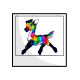 Rainbow Viotto Photo