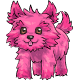 Pink Toto