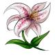 Pink Speckled Stargazer Lily