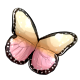 Dawn Queen Butterfly Wings