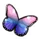 Dusk Queen Butterfly Wings