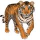 royalchest_tiger.png